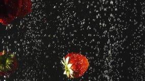 Φράουλα που περιέρχεται στο νερό με τις φυσαλίδες στο μαύρο υπόβαθρο Φρέσκα μούρα στο νερό Οργανικό μούρο, φρούτα απόθεμα βίντεο