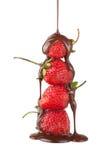 φράουλα σοκολάτας Στοκ εικόνες με δικαίωμα ελεύθερης χρήσης