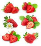 φράουλα συλλογής Στοκ φωτογραφίες με δικαίωμα ελεύθερης χρήσης