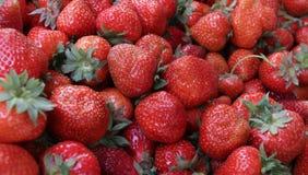 Φράουλα Φρέσκες οργανικές φράουλες στο φως της ημέρας σε μια αγορά Ανασκόπηση καρπών τρόφιμα υγιή Ανασκόπηση φραουλών Στοκ εικόνα με δικαίωμα ελεύθερης χρήσης