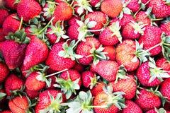 Φράουλες - ένα από το εύγευστο μούρο στοκ εικόνα