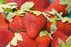 φράουλες ανασκόπησης Στοκ φωτογραφίες με δικαίωμα ελεύθερης χρήσης