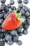 φράουλες βακκινίων Στοκ Φωτογραφίες