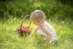 Φράουλες επιλογής μικρών κοριτσιών στοκ φωτογραφία