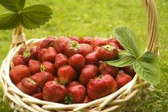 φράουλες καλαθιών Στοκ Φωτογραφία