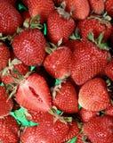 φράουλες ομάδας Στοκ Φωτογραφία