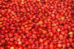Φράουλες που ενυδατώνονται κόκκινες στο νερό για να κάνει τη μαρμελάδα Στοκ εικόνα με δικαίωμα ελεύθερης χρήσης