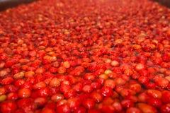 Φράουλες που ενυδατώνονται κόκκινες στο νερό για να κάνει τη μαρμελάδα Στοκ Εικόνες