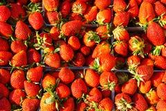 Φράουλες σε ένα εμπορευματοκιβώτιο Ώριμα μούρα στοκ εικόνες