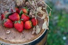 Φράουλες σε ένα ξύλινο βαρέλι κρασιού σε έναν οπωρώνα στο καλοκαίρι Κόκκινα φρούτα στοκ εικόνα με δικαίωμα ελεύθερης χρήσης