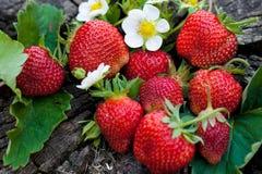 Φράουλες σε ένα ξύλινο κολόβωμα Στοκ Φωτογραφίες