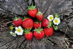 Φράουλες σε ένα ξύλινο κολόβωμα Στοκ Εικόνες