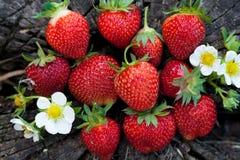 Φράουλες σε ένα ξύλινο κολόβωμα Στοκ Φωτογραφία