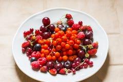 Φράουλες, σμέουρα, κόκκινες και μαύρες σταφίδες, κεράσι, μούρα σορβιών σε ένα πιάτο Στοκ Φωτογραφία
