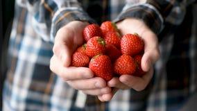 Φράουλες στα αρσενικά χέρια απόθεμα βίντεο