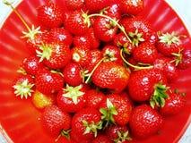 Φράουλες στο κόκκινο κύπελλο στοκ εικόνες με δικαίωμα ελεύθερης χρήσης