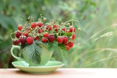 Φράουλες στο φλυτζάνι στο πράσινο υπόβαθρο φυσικό καλοκαίρι ανασκόπ στοκ εικόνες
