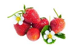 φράουλες φύλλων λουλουδιών Στοκ φωτογραφίες με δικαίωμα ελεύθερης χρήσης
