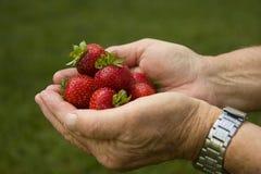 φράουλες χουφτών Στοκ Εικόνες