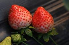 φράουλες δύο Στοκ Φωτογραφίες