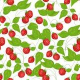 Φράουλα άνευ ραφής απεικόνιση αποθεμάτων