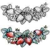 Φράουλα Απεικόνιση Watercolor που απομονώνεται στο λευκό Στοκ Εικόνα