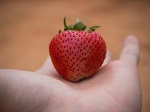 Φράουλα εκμετάλλευσης γυναικών υπό εξέταση Στοκ Εικόνες