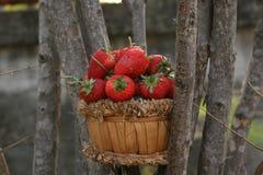 Φράουλα, εστίαση στην ομάδα φράουλας στο καλάθι στοκ εικόνες