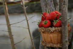 Φράουλα, εστίαση στην ομάδα φράουλας στο καλάθι στοκ εικόνα
