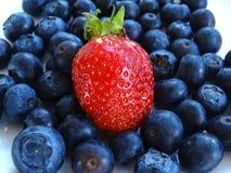 Φράουλα και βακκίνια Στοκ Εικόνα