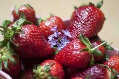 Φράουλα και ιώδες λουλούδι Στοκ φωτογραφίες με δικαίωμα ελεύθερης χρήσης