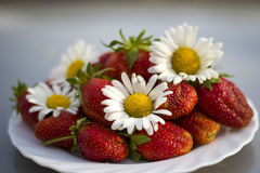 Φράουλα με τα χρώματα camomile Στοκ φωτογραφίες με δικαίωμα ελεύθερης χρήσης