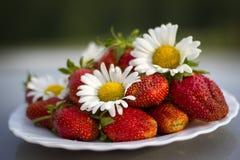 Φράουλα με τα χρώματα camomile Στοκ εικόνες με δικαίωμα ελεύθερης χρήσης