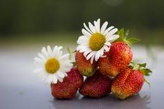 Φράουλα με τα camomiles σε ένα γκρίζο υπόβαθρο καθρεφτών Στοκ εικόνα με δικαίωμα ελεύθερης χρήσης