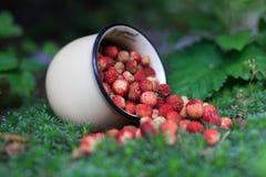 Φράουλα μούρων στο θερινό δάσος Στοκ Φωτογραφία