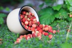 Φράουλα μούρων στο θερινό δάσος Στοκ εικόνες με δικαίωμα ελεύθερης χρήσης