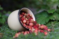 Φράουλα μούρων στο θερινό δάσος Στοκ Εικόνες