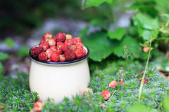 Φράουλα μούρων στο θερινό δάσος Στοκ φωτογραφίες με δικαίωμα ελεύθερης χρήσης