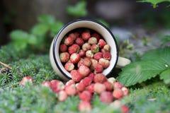 Φράουλα μούρων στο θερινό δάσος Στοκ εικόνα με δικαίωμα ελεύθερης χρήσης
