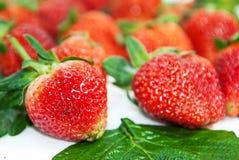 Φράουλα πέρα από την άσπρη ανασκόπηση στοκ φωτογραφίες