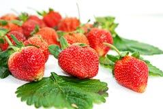 Φράουλα πέρα από την άσπρη ανασκόπηση στοκ εικόνες