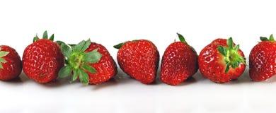 Φράουλα που απομονώνεται στο άσπρο πανόραμα υποβάθρου απαγορευμένα στοκ εικόνες με δικαίωμα ελεύθερης χρήσης