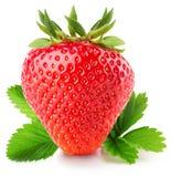 Φράουλα που απομονώνεται στο άσπρο υπόβαθρο Στοκ Φωτογραφία