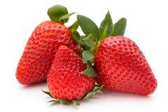 Φράουλα που απομονώνεται στο άσπρο φρέσκο μούρο υποβάθρου Στοκ εικόνα με δικαίωμα ελεύθερης χρήσης