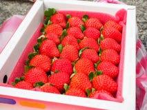 Φράουλα σε ένα κιβώτιο Στοκ Φωτογραφίες