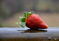 Φράουλα στη βροχή Στοκ φωτογραφίες με δικαίωμα ελεύθερης χρήσης