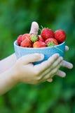 Φράουλα στο κύπελλο με τα χέρια Στοκ Φωτογραφίες