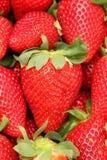 Φράουλα Gigant Στοκ φωτογραφία με δικαίωμα ελεύθερης χρήσης