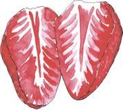 Φράουλα Watercolor Στοκ εικόνες με δικαίωμα ελεύθερης χρήσης