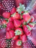 Φράουλες έτοιμες να φάνε Στοκ Φωτογραφία